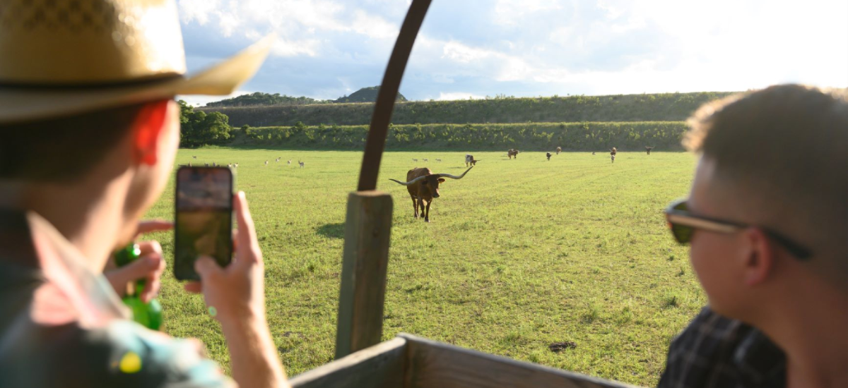 Enchanted Springs Ranch is the perfect location for a corporate event, private event or a team building retreat. Our favorite ranch activity is the tractor wagon ride to view a variety of exotic animals in the back forty.