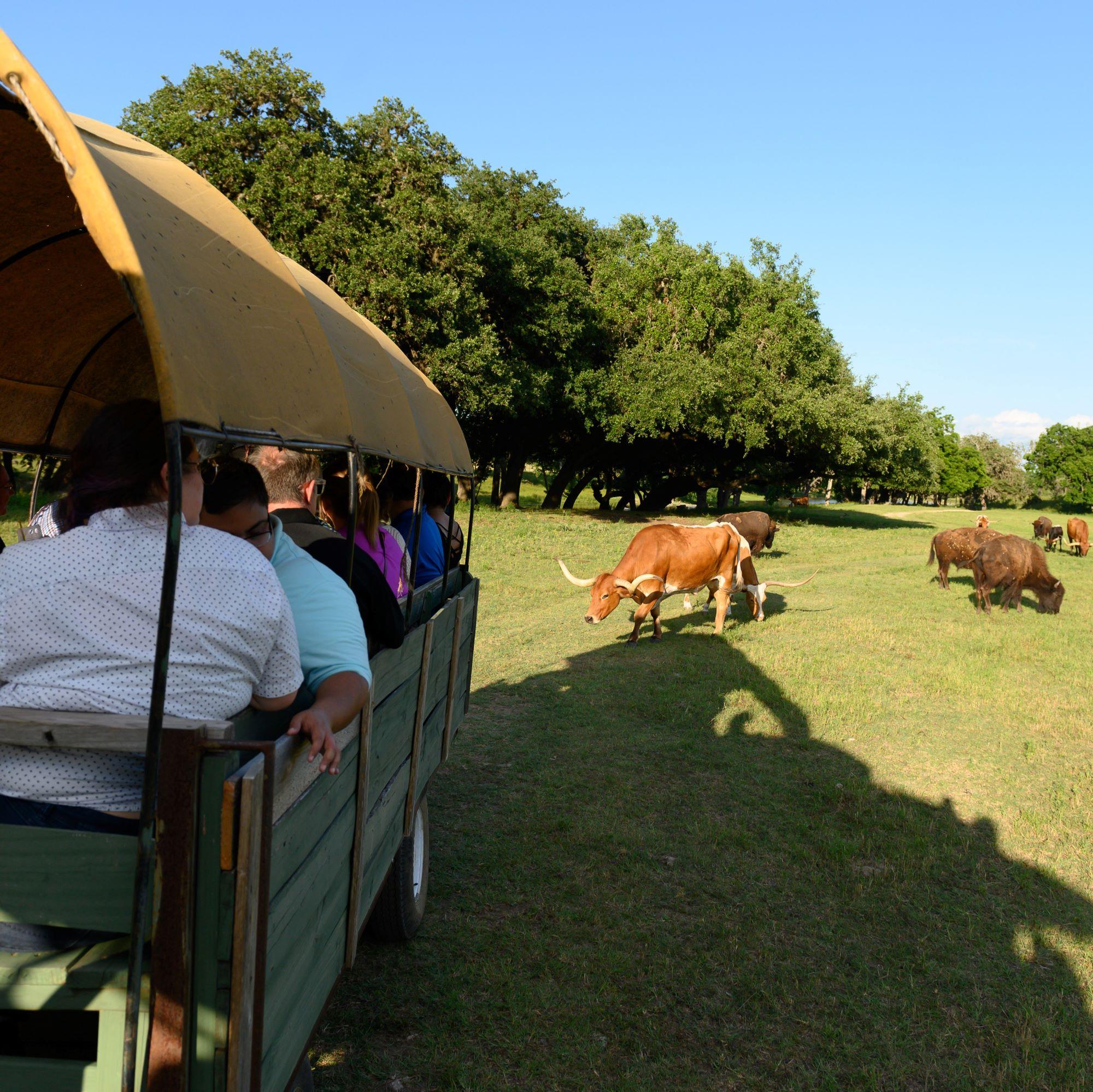 San Antonio Team Building Retreat Corporate Event Venue Covered Wagon Ride Activity